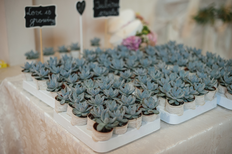 Fotografie de nunta cu marturii plante suculente
